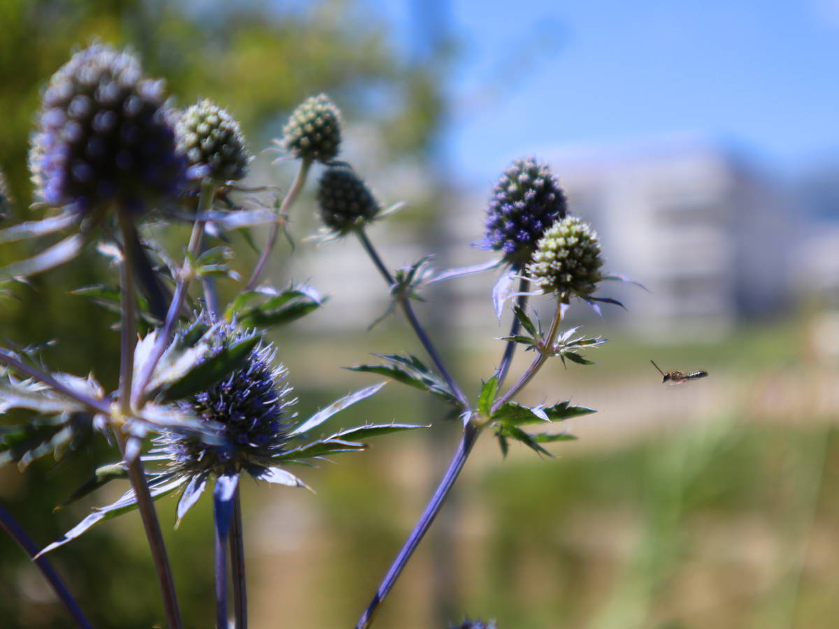 Amenagement paysager d'une terrasse à Divonne-les-Bains
