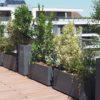Balcons & compagnie paysagiste aménage votre extérieur en ville comme un petit jardin d'immeuble du pays-de-gex décorateur de jardin décoration extérieur terrasse bois balcon fleuris